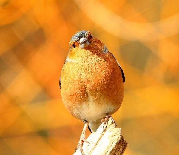 Slimbridge Small Birds by Glostopcat