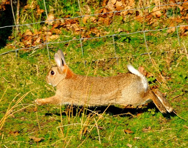 Run rabbit run! by Nicksi