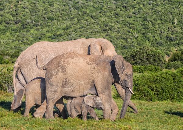 Elephant family by sdixon2380