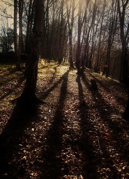 Aberfeldy Woodland by Irishkate