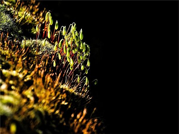 Succulentii by Berniea