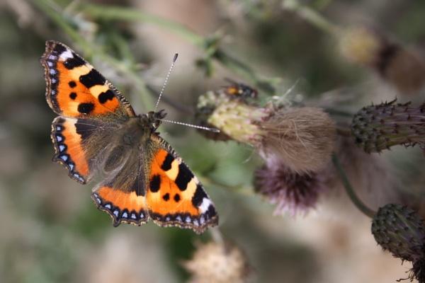 butterfly by min