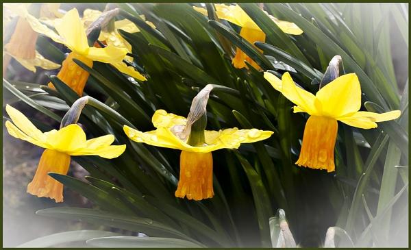 springtime at last by derekp