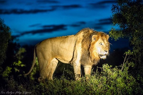 Beast by TomCoetzee