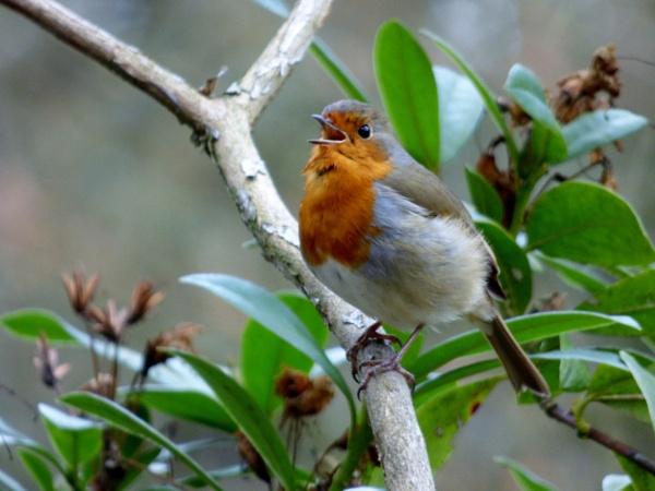 bird song by kevlense