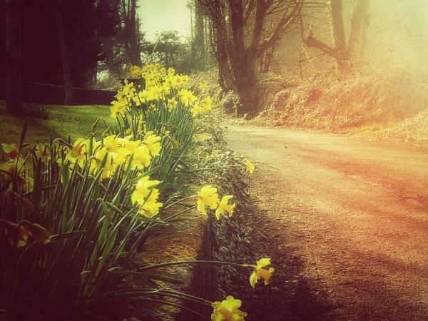 Spring by scruffytrafford