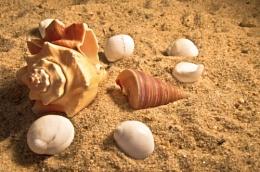 Seashells ..
