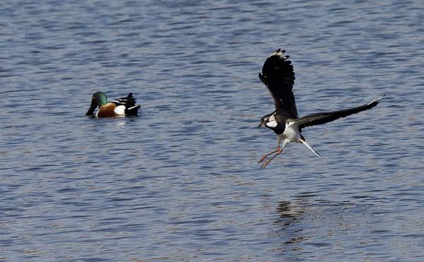 Landing by Fogey