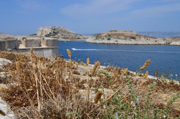 dried island by Dairtreephoto