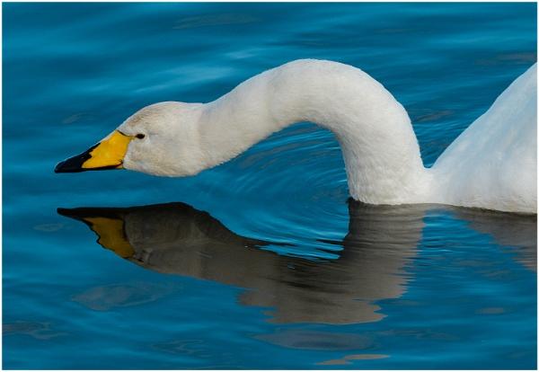 Swan Neck
