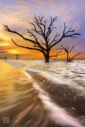 Tidal Trees