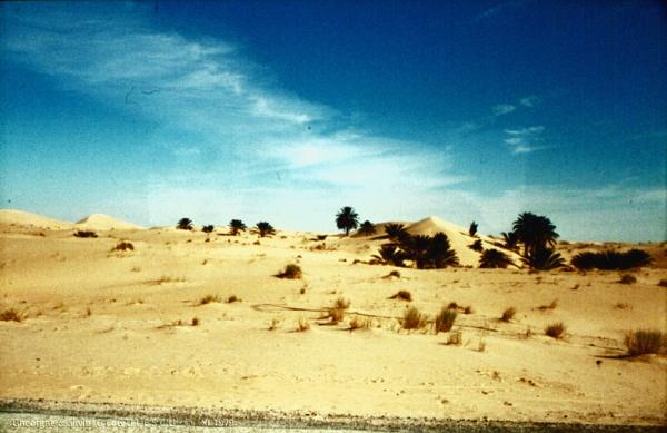 Algeria: 4. Grand Erg Oriental by gss