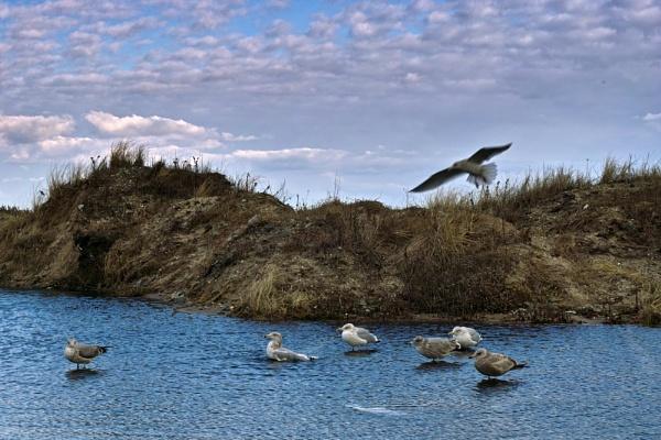 lounging gulls by slan57