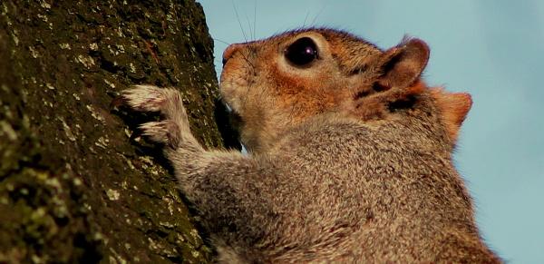 squirrel by eyespy