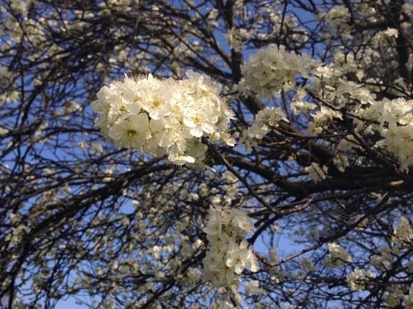 Spring Has Sprung by GarrathE