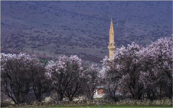 Village Mosque in Spring by nonur