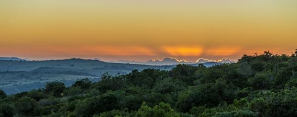 Early morning safari by sdixon2380