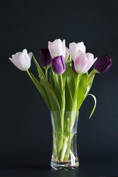 Tulips by dabbler100