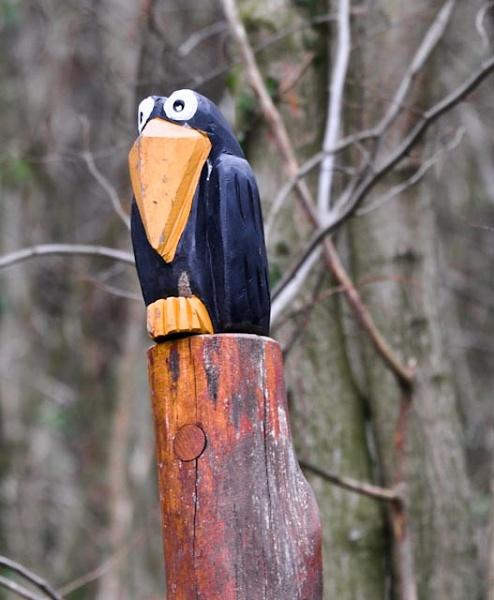 Woody by Drighlynne