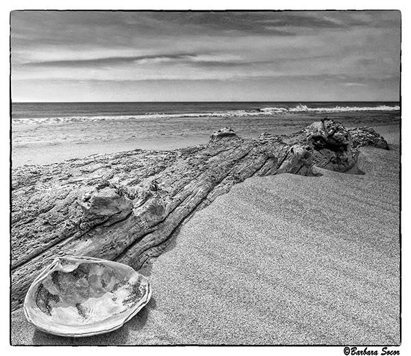 On the Beach by Barjo