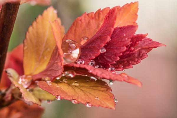 Hot Leaves by WeeGeordieLass