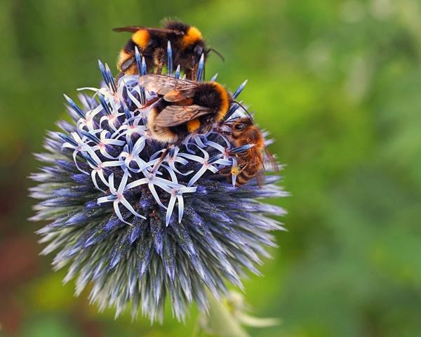 Bees by victorburnside
