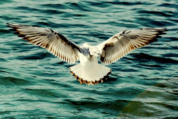 Seagull by Split