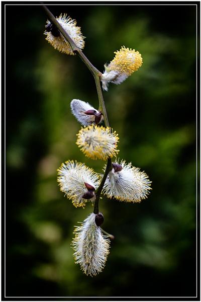 Spring by jason_e