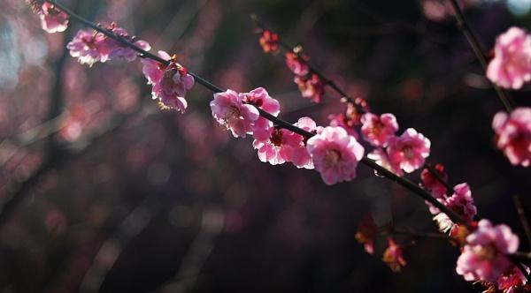 enjoy the spring by piggie_vickie