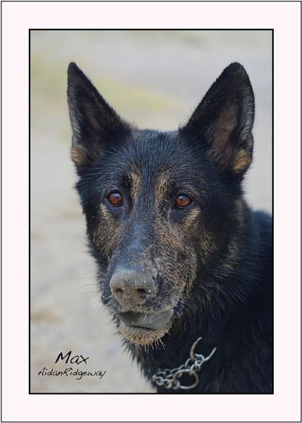 Max by Ridgeway