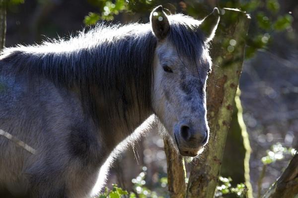 Backlit Pony by P_Higham