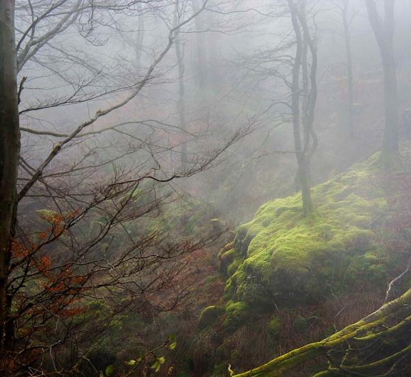 A Patch of Light on a Misty Day by Andysnapper