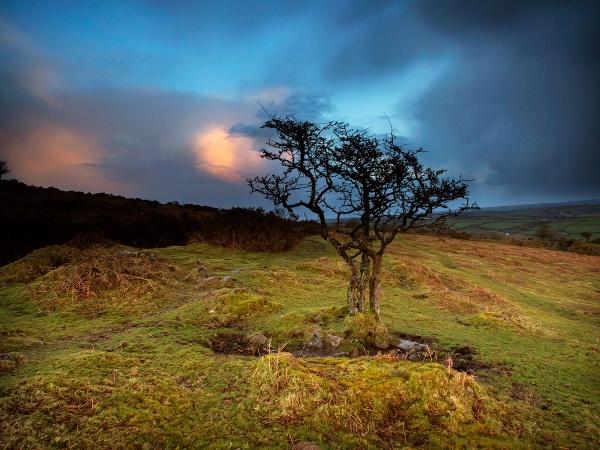 Lone Tree by ilocke