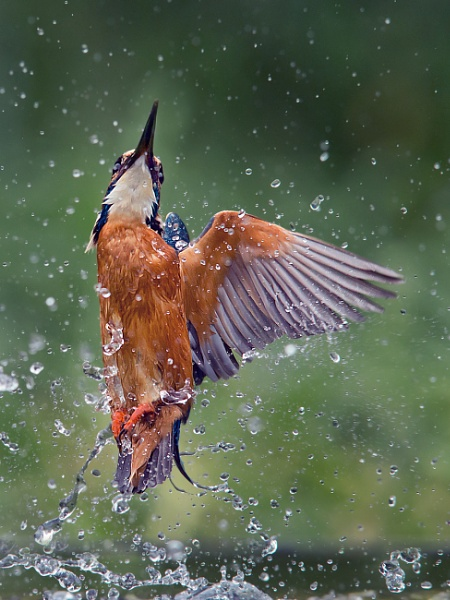 wet and wild by Jamie_MacArthur
