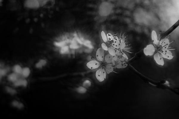 Blossom by Seonaid