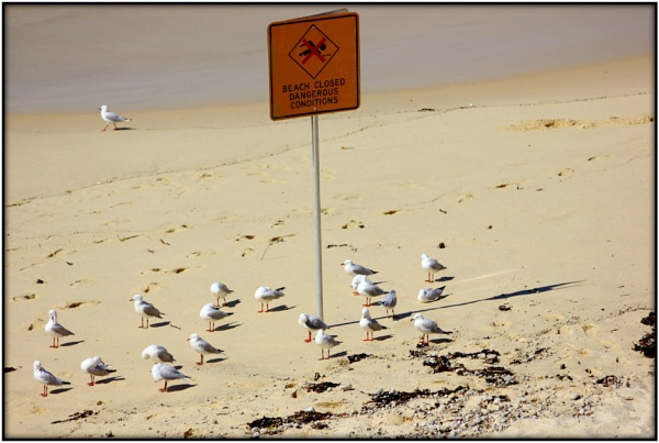 Nobody Told the Seagulls ! by Lynniesefforts