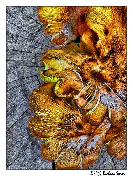 Bumps on a Log by Barjo
