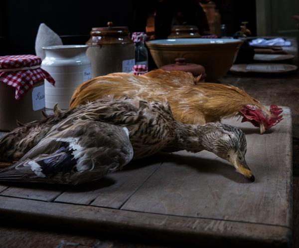 Dead duck at Dunham by cfreeman