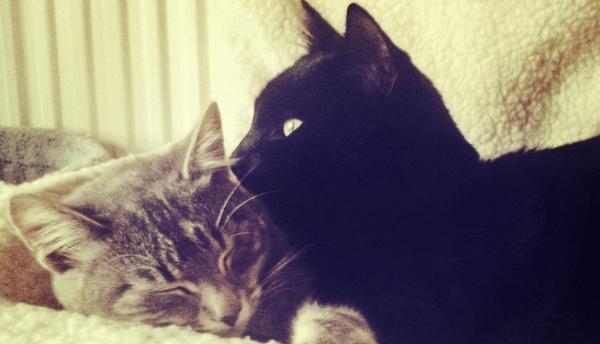 Sid and Nancy by ChunkyButFunky