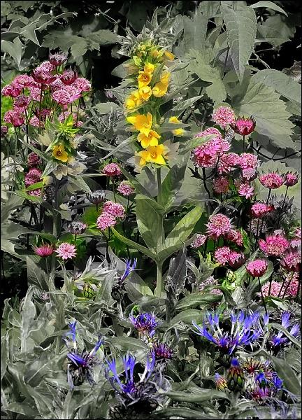 Burst of colour 3 by salopian