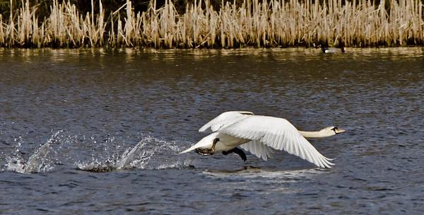 Splashing About. by Fogey
