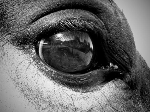 through the horses eyes by poppyandbea