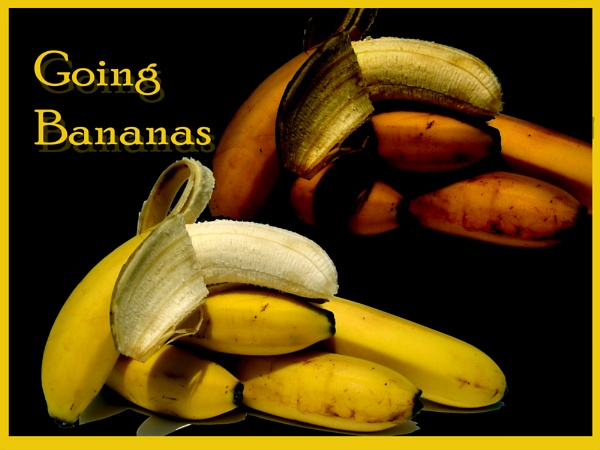 \'\'Going Bananas\'\' by Tosh4photos