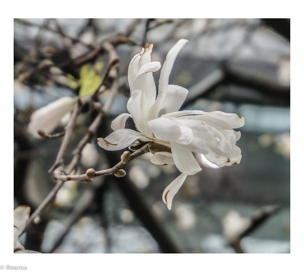 Floral - Spring 2014 by Swarnadip