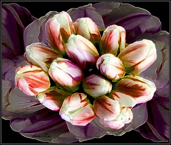 Tulip-merger-mania by doerthe