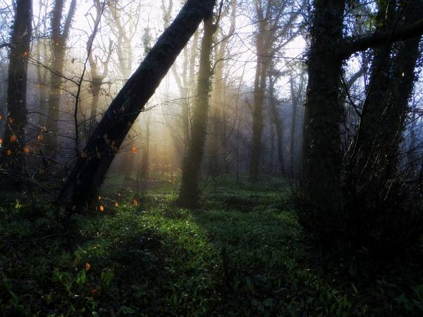 woodland mist by togwood