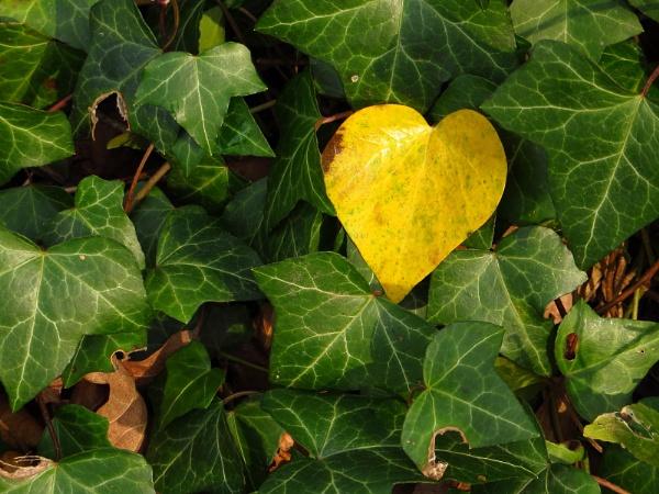 yellow leaf by togwood