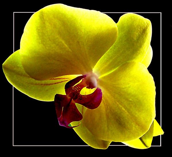 Orchid 2 by derekv