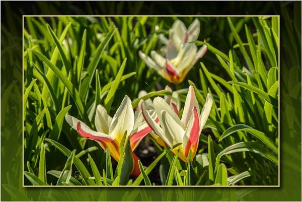 Spring Flowers by TrevBatWCC