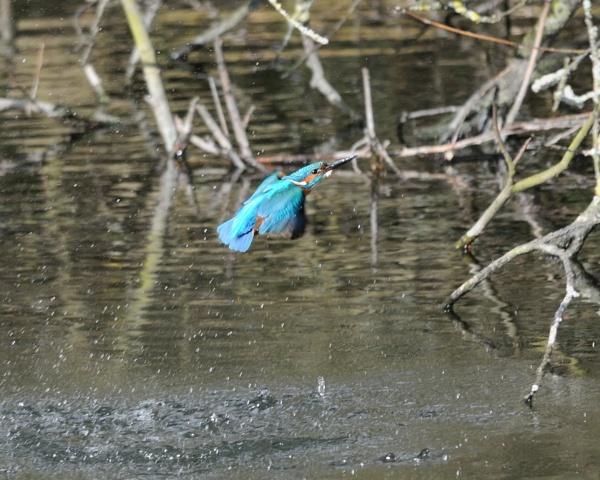 Blue Arrow by Malty